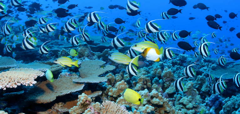 Private Snorkeling Charters