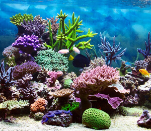 Coral Reefs to See in Cabo